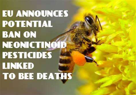 pesticides ill effects