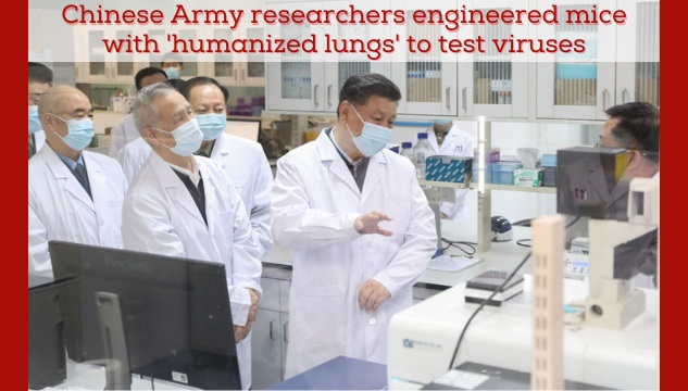 China engineered mice with 'humanized lungs' to test infectiousness viruses